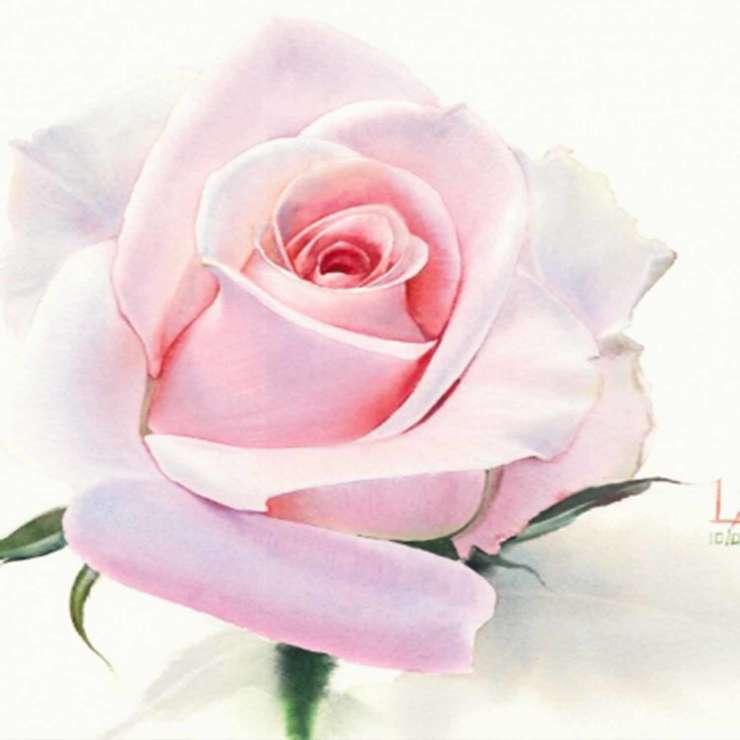 Акварель «Роза»